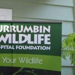 Currumbin Wildlife Hospital Foundation