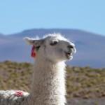 Bolivia : Reserva Nacional de Fauna Andina Eduardo Avaroa – Salar d'Uyuni