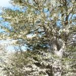 Chile : Patagonia : Punta Arenas – Reserva Nacional Magallanes